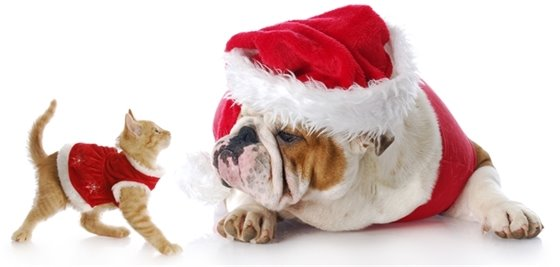 Pets Dressed Up in Santa Suits